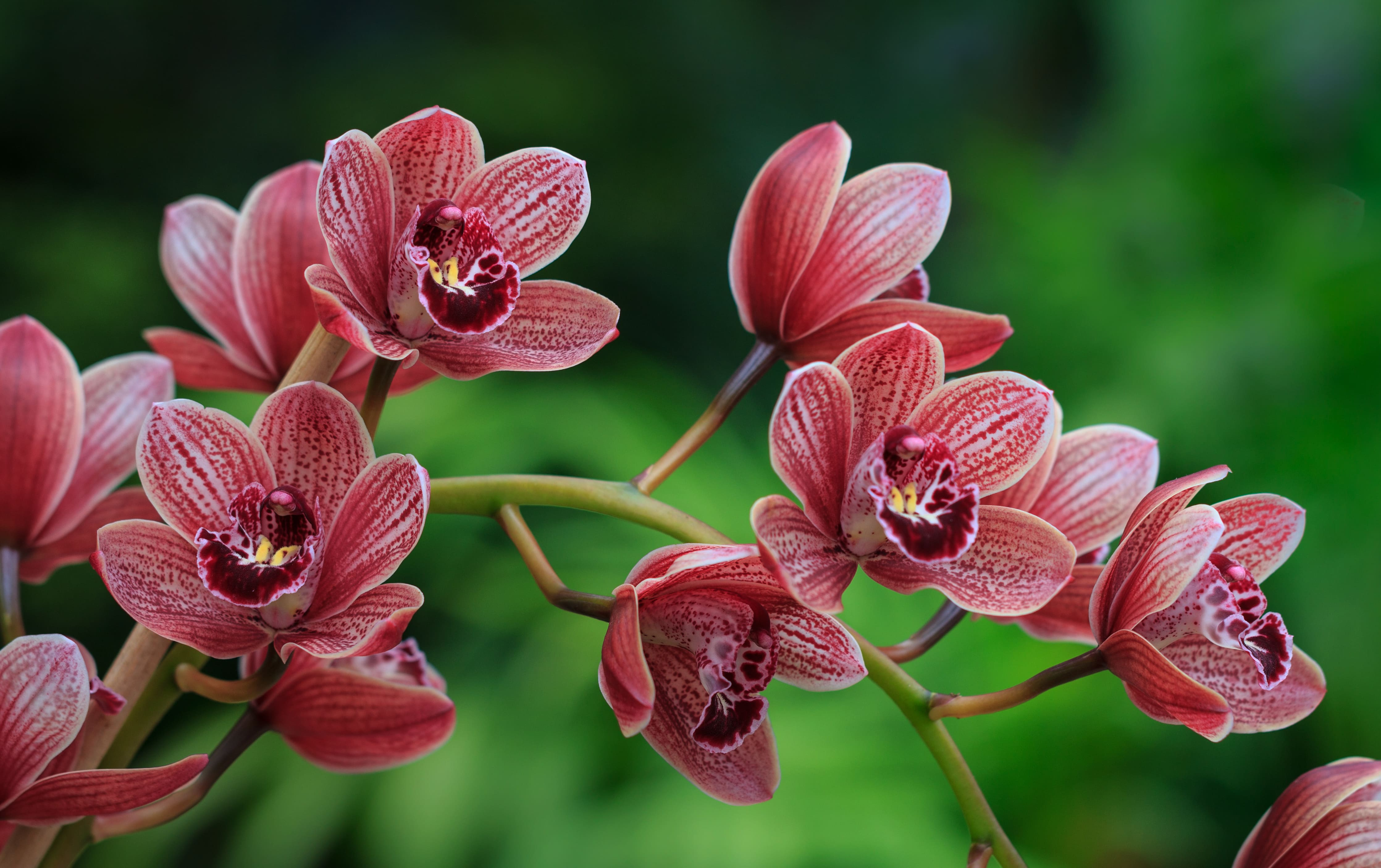 orchid-17