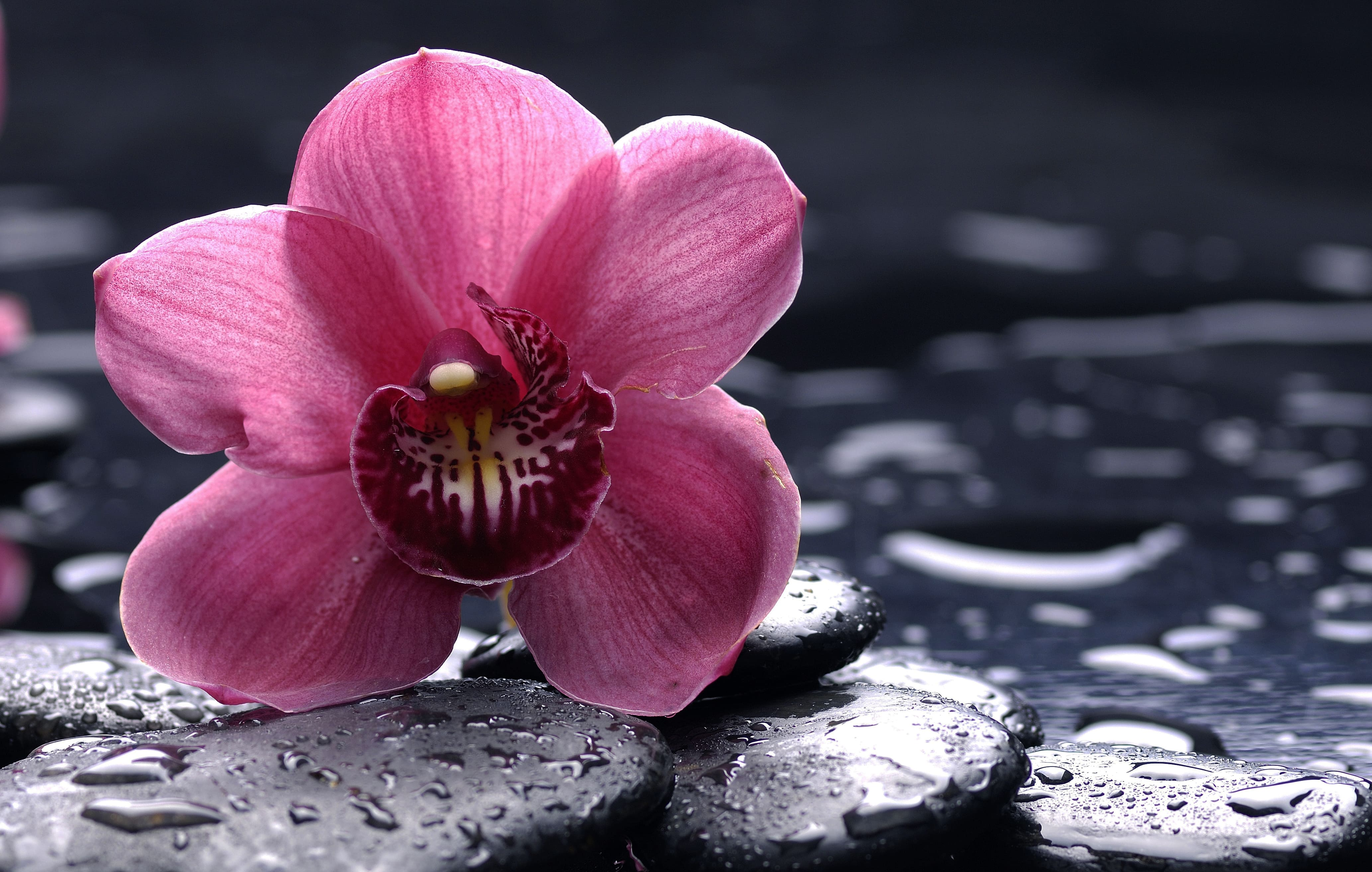 orchid-19