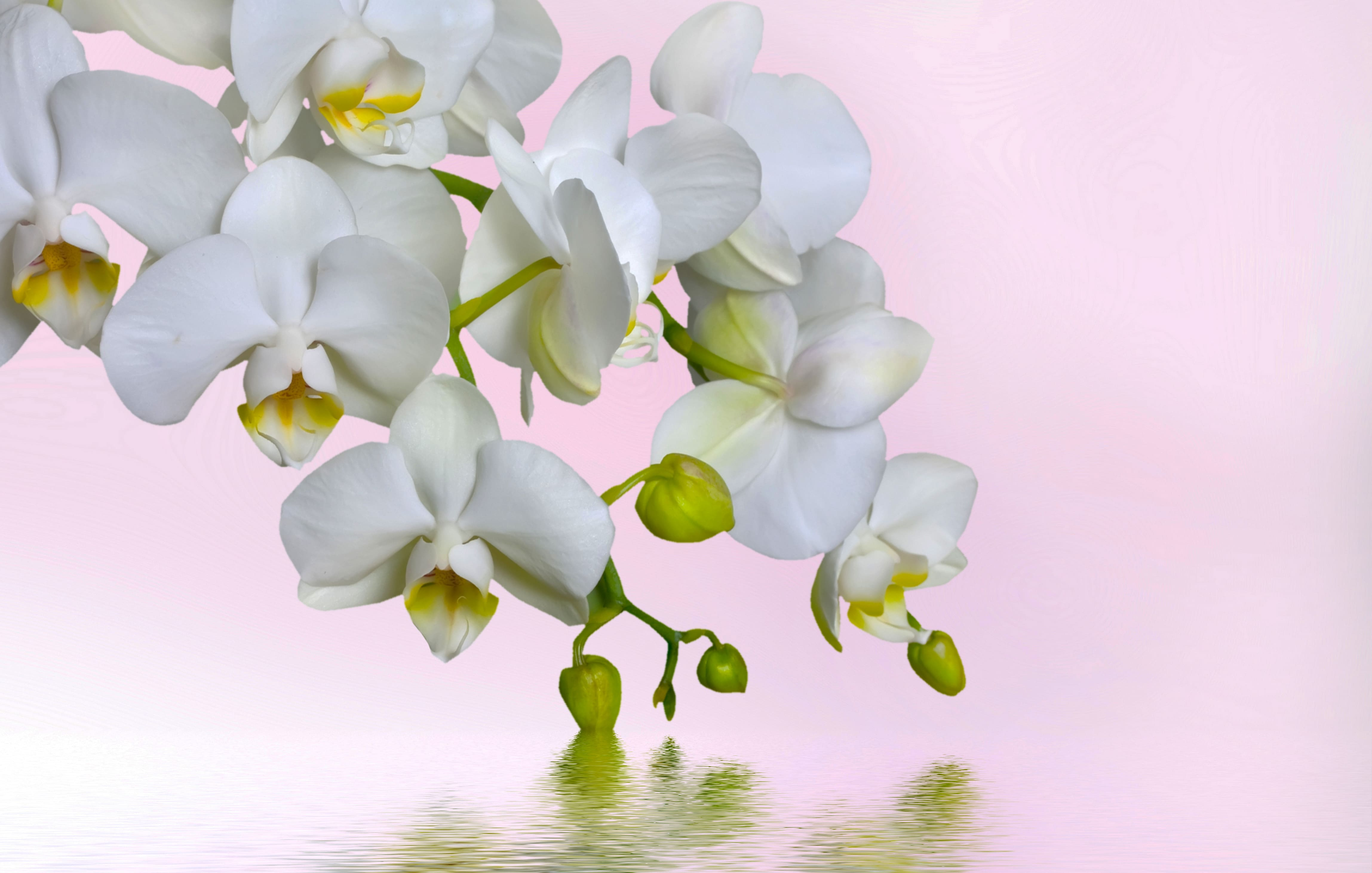 orchid-27