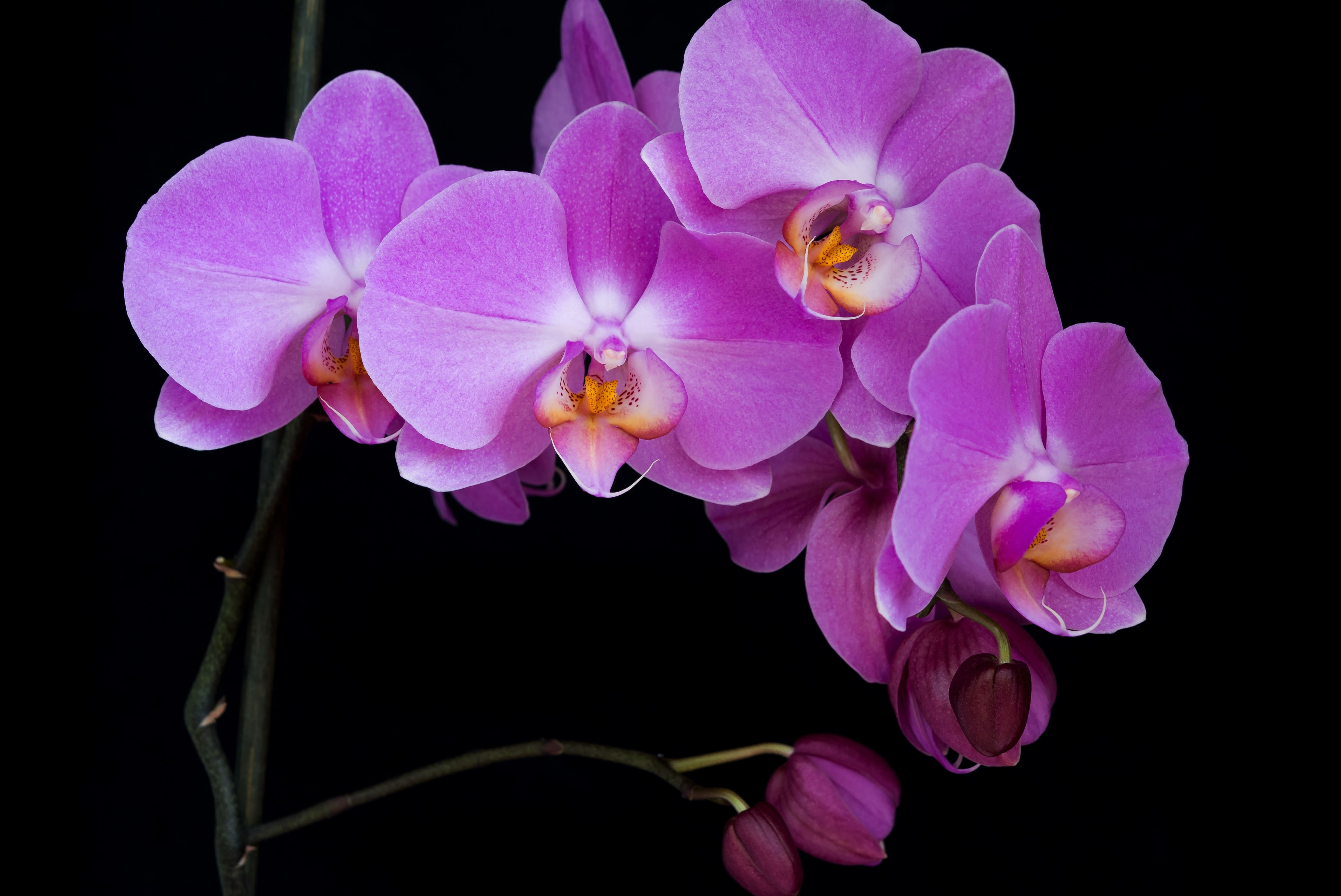 orchid-30