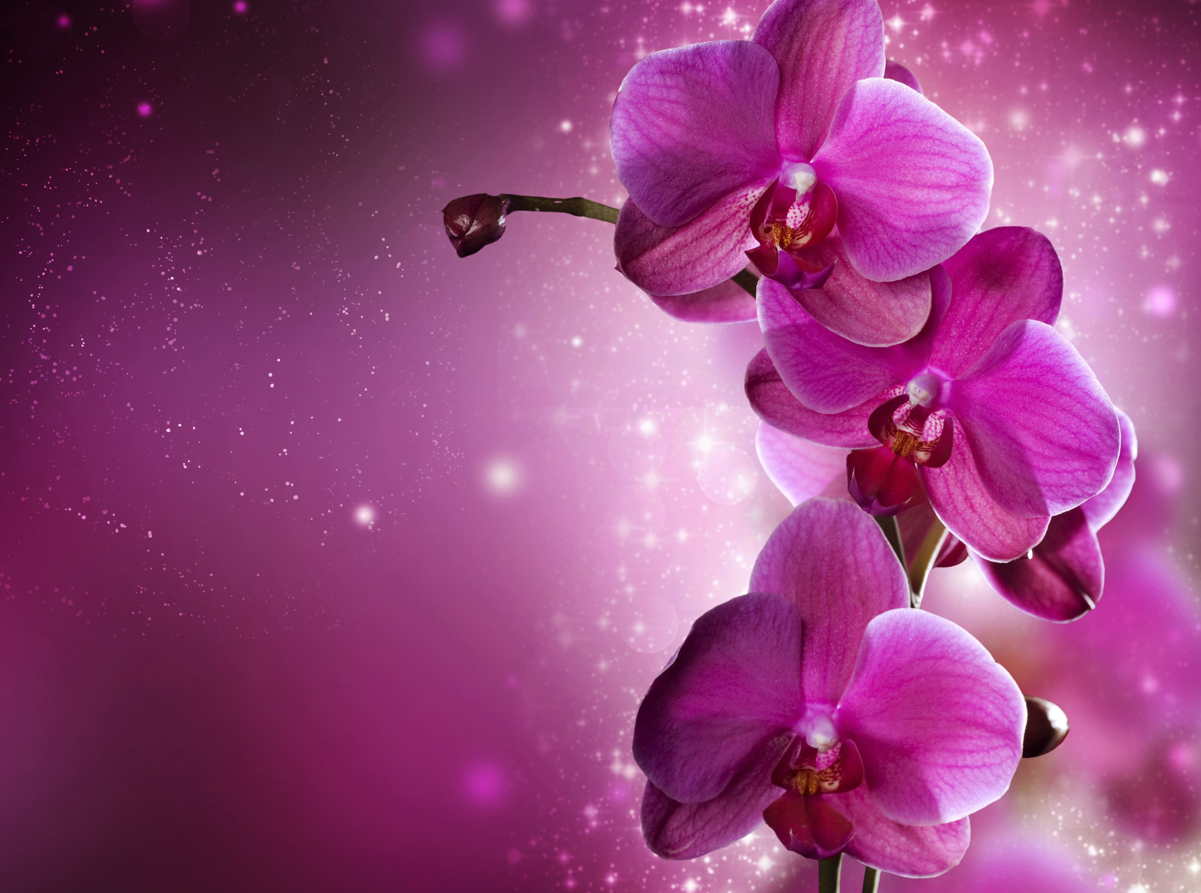 orchid-32
