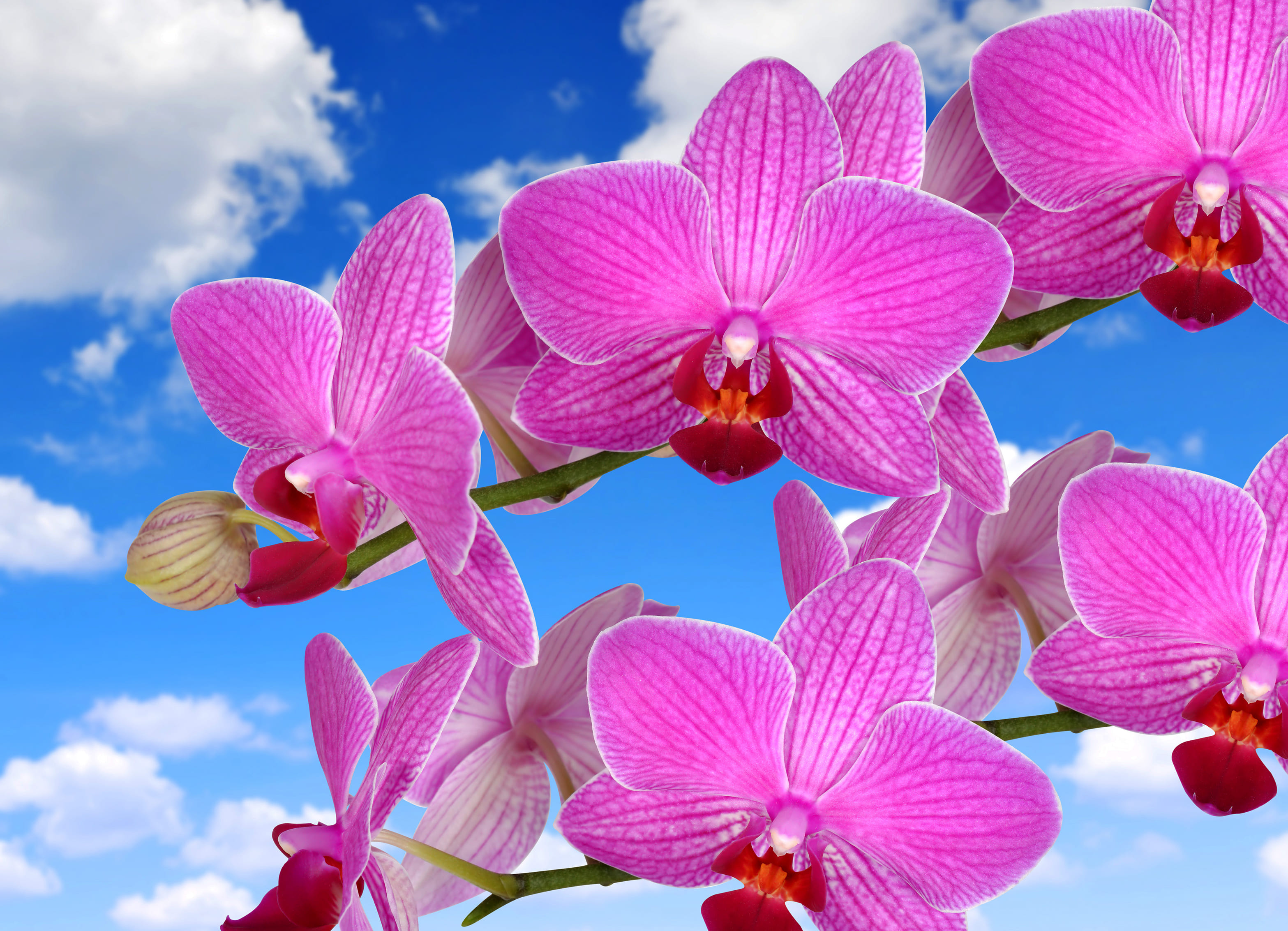 orchid-34