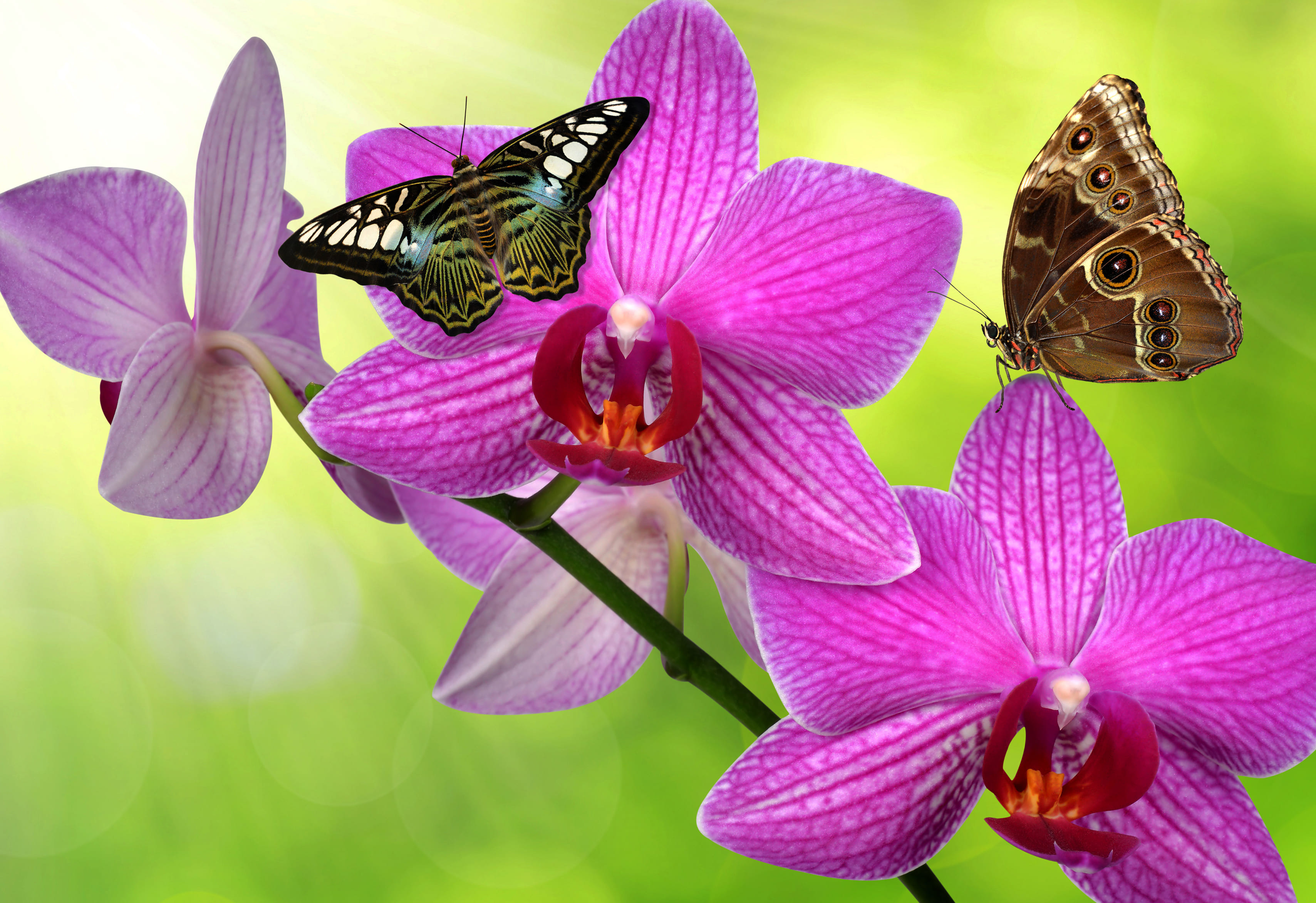 orchid-35