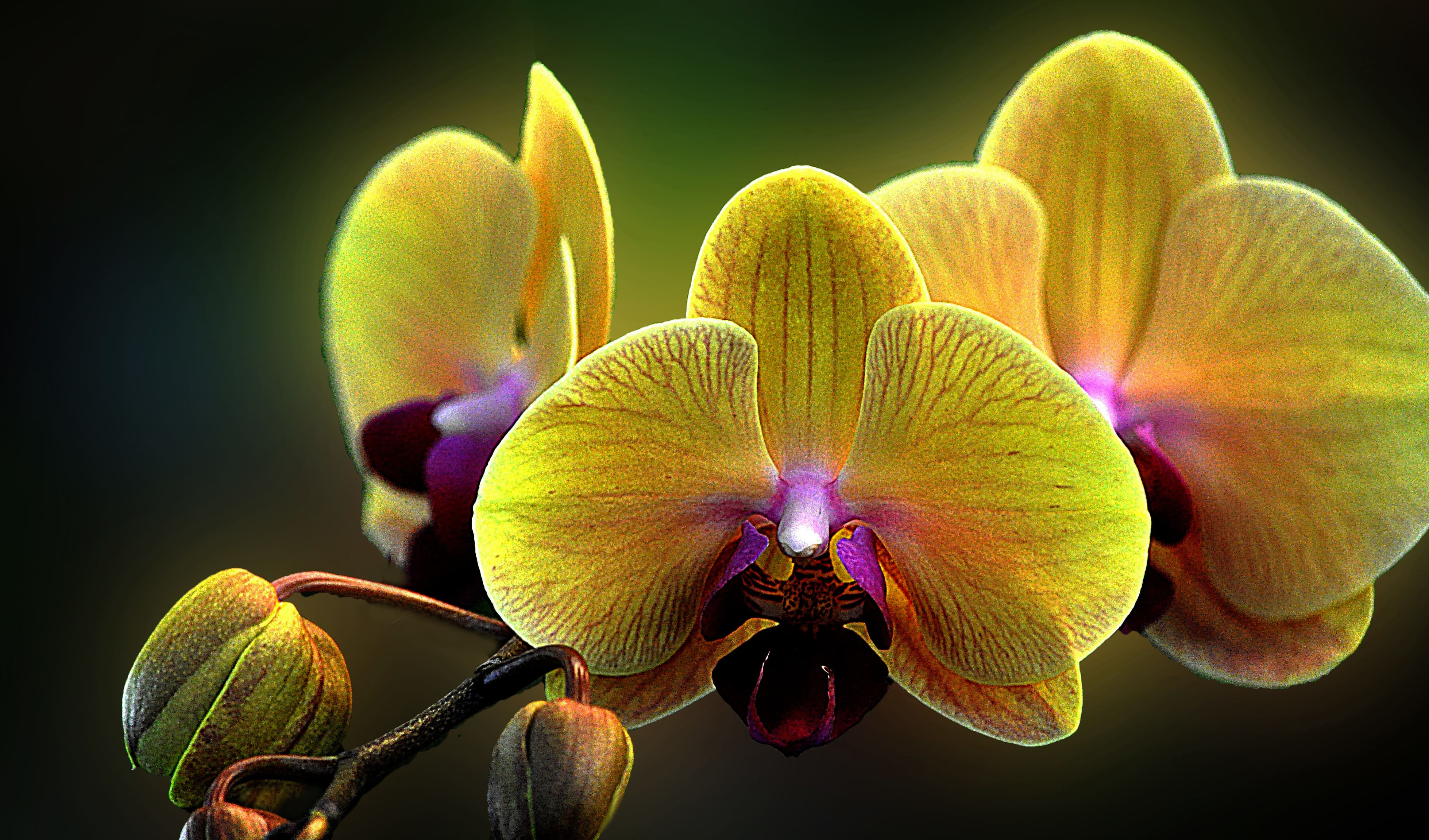 orchid-45