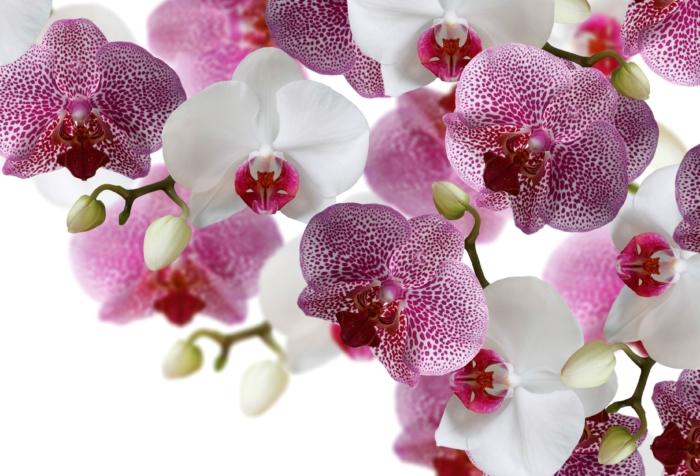 Fotos de hermosas orquídeas - 100 imágenes de alta resolución