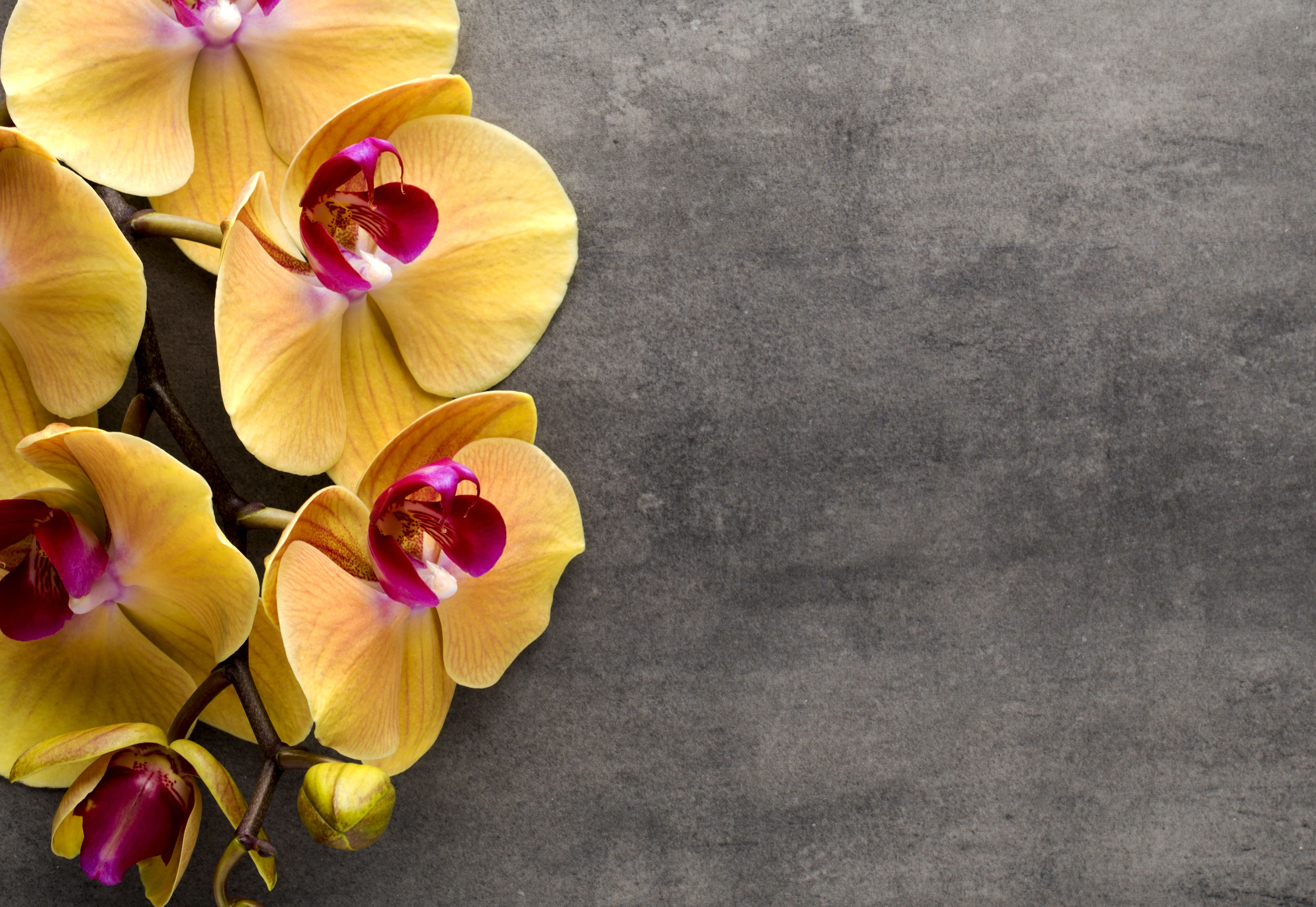 orchid-5