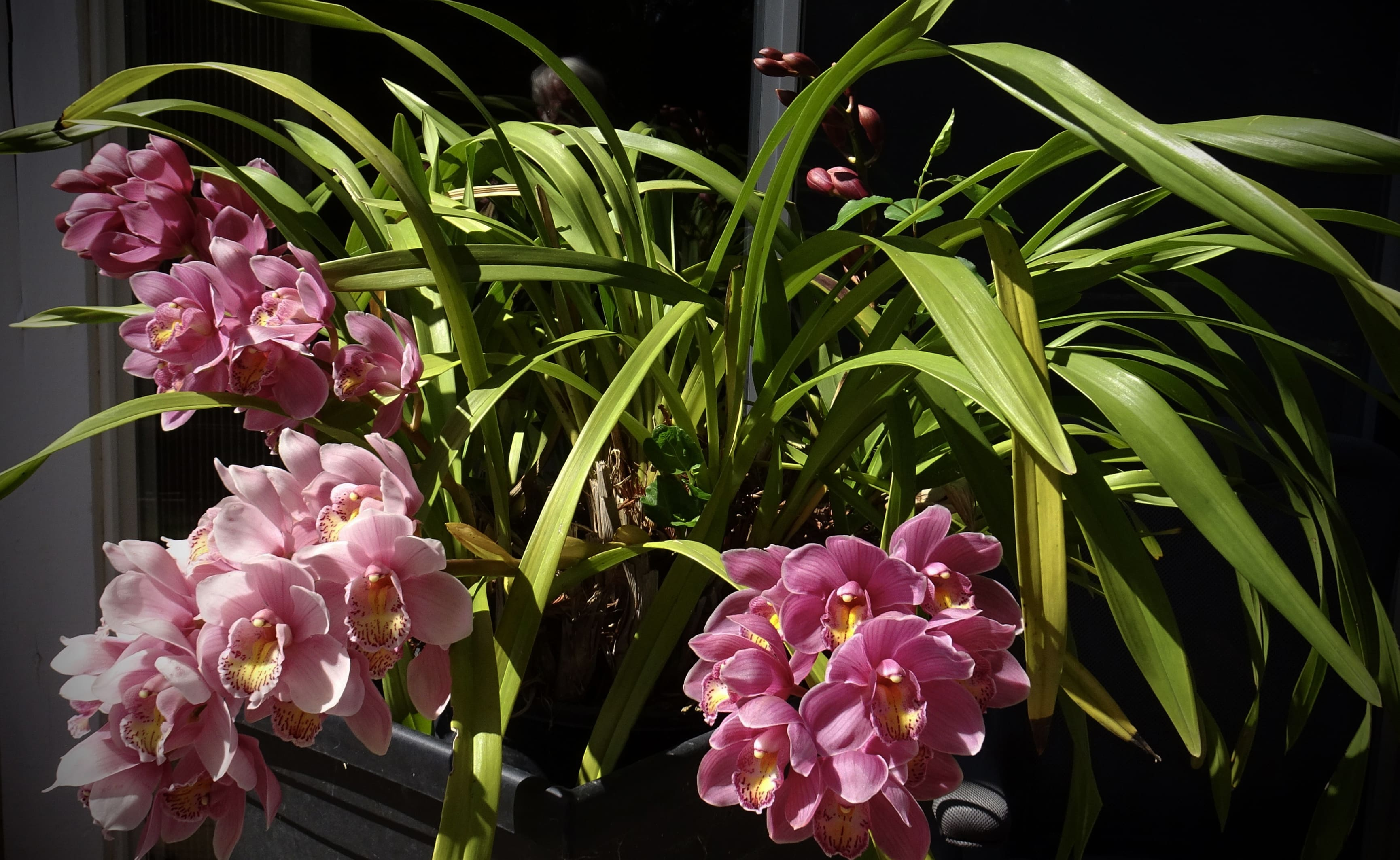 orchid-53