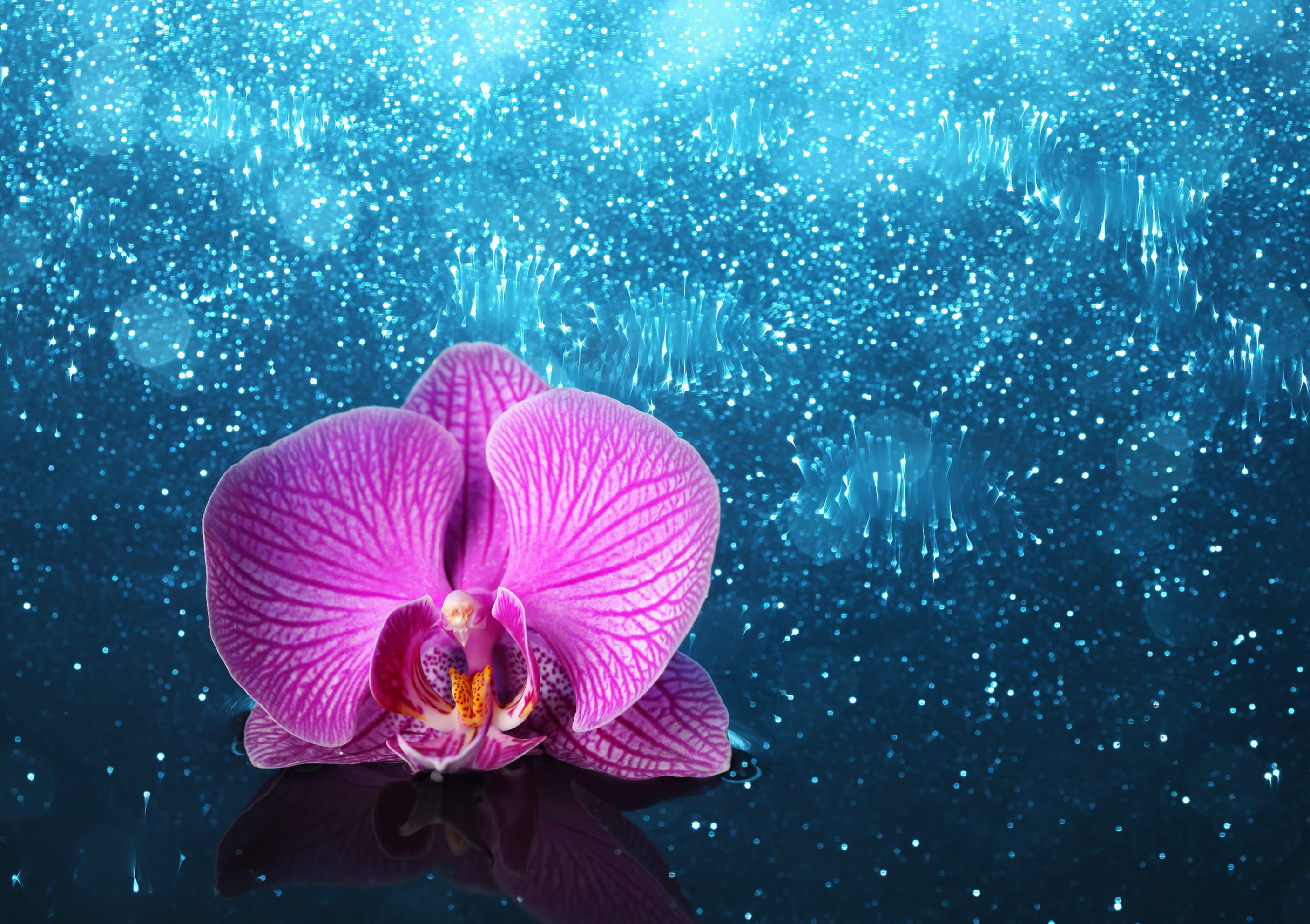 orchid-57