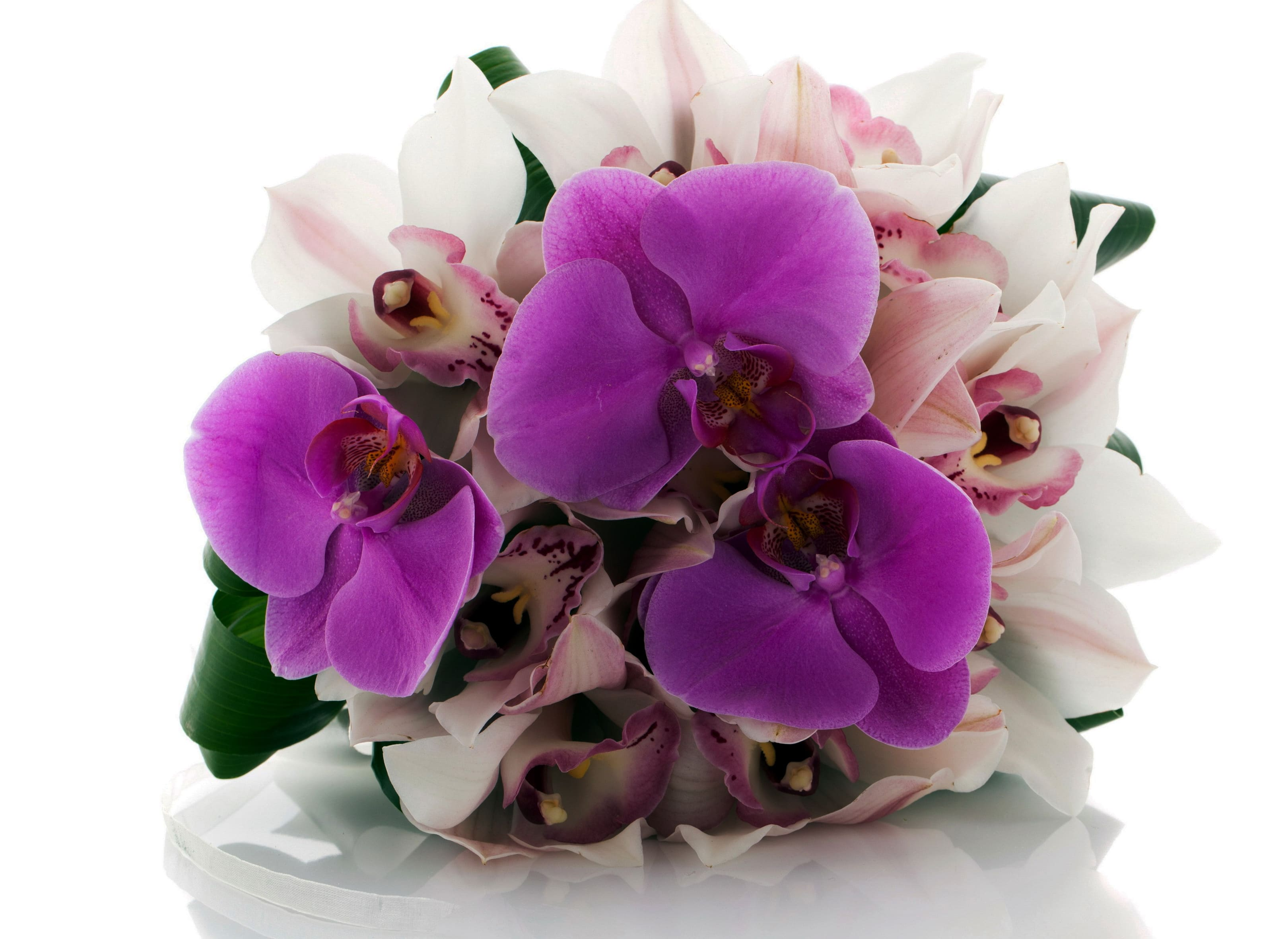 orchid-71
