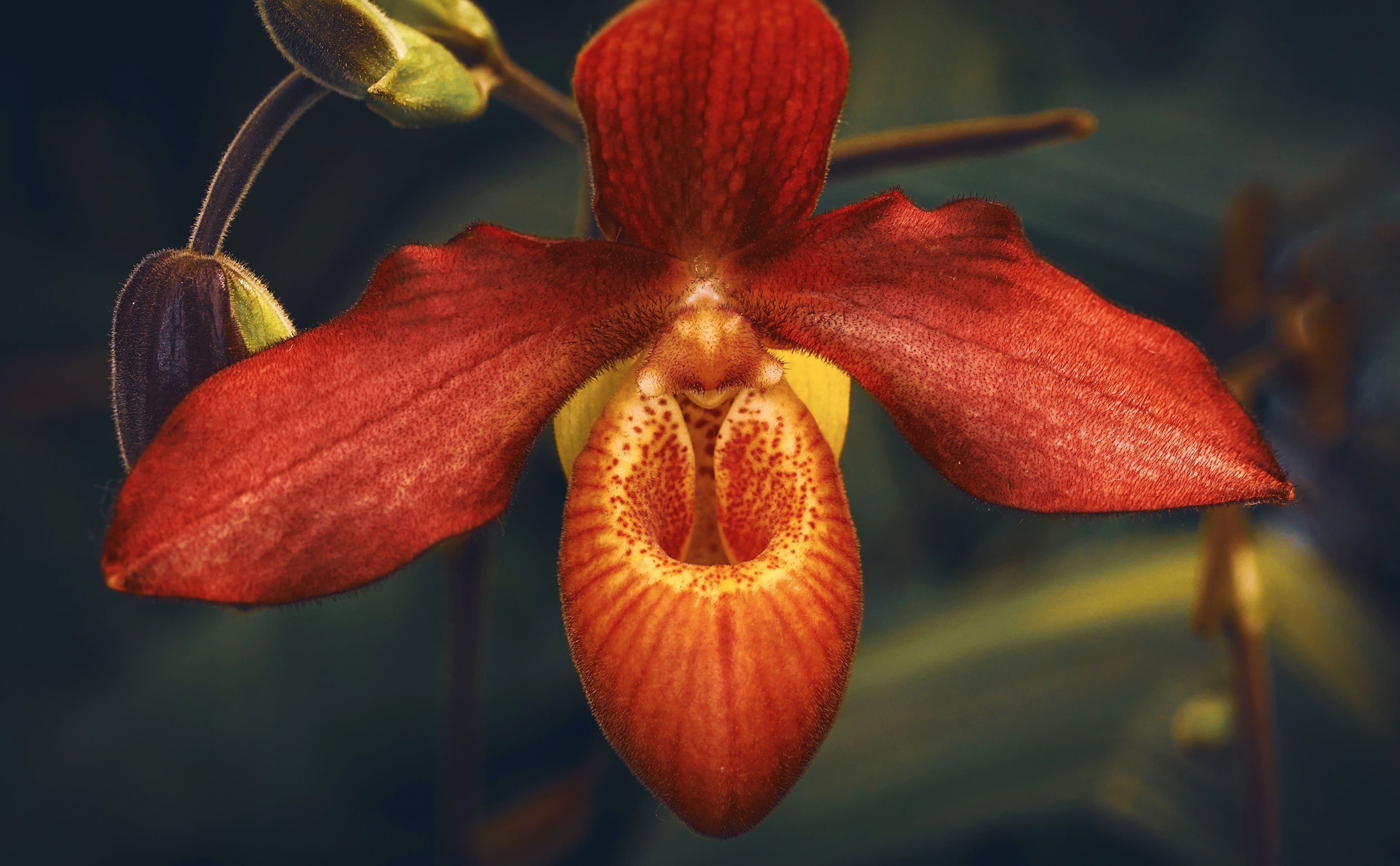orchid-76