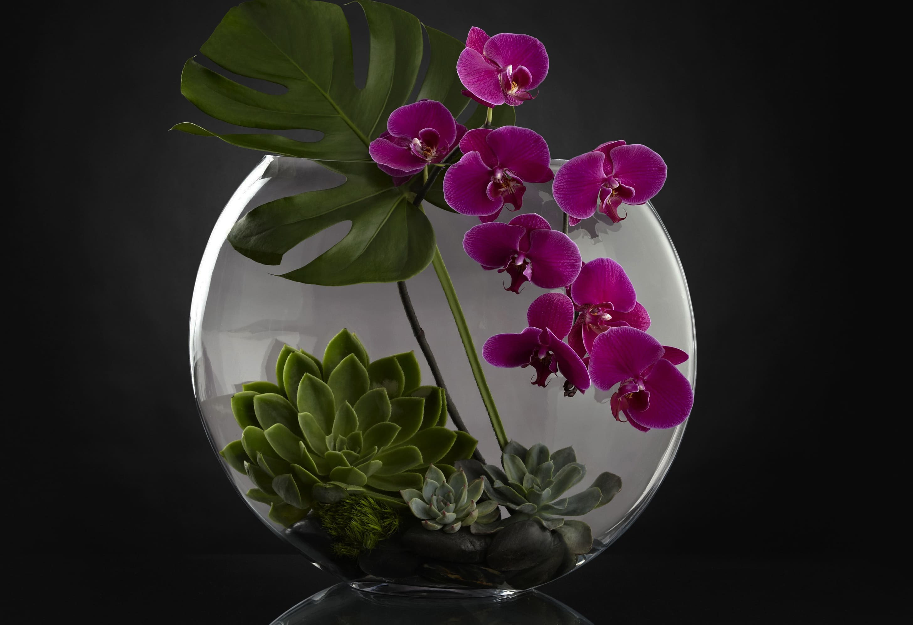 orchid-88