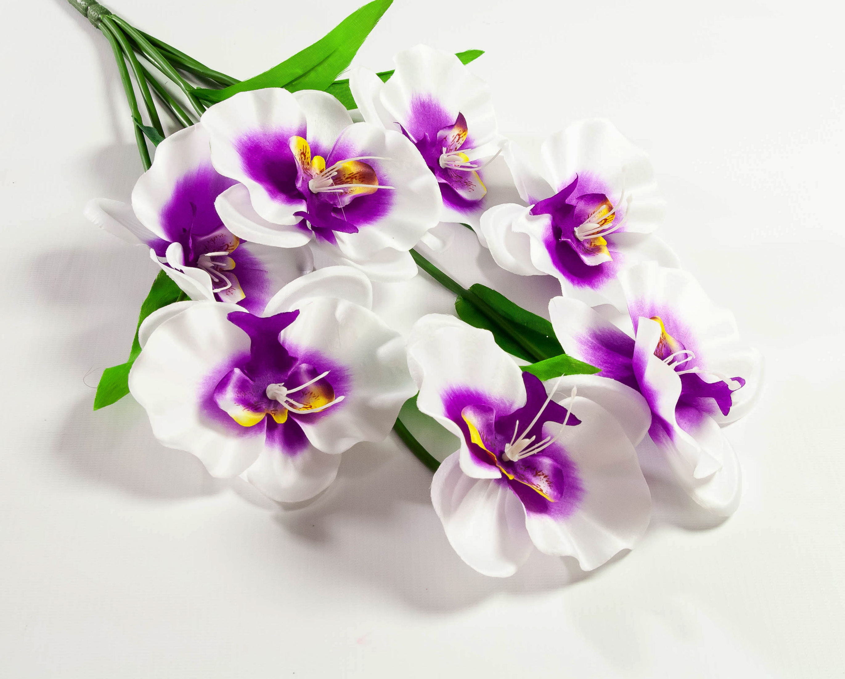 orchid-91