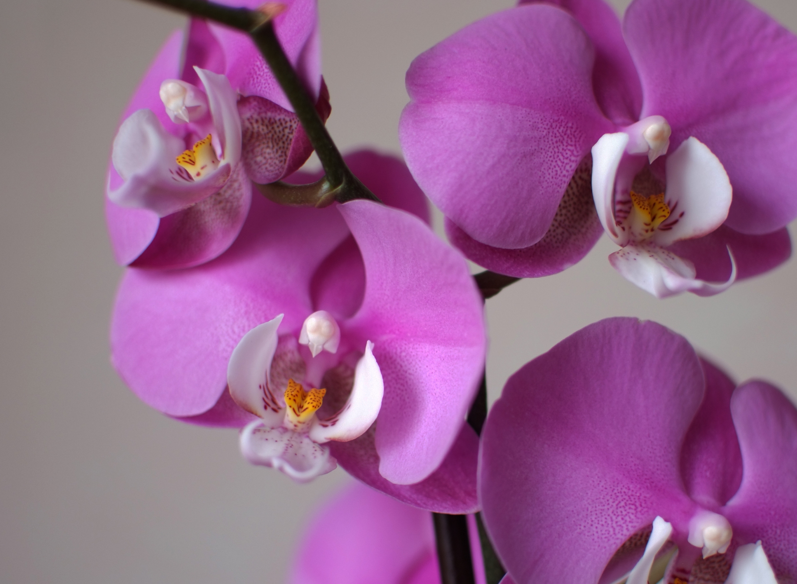 orchid-98