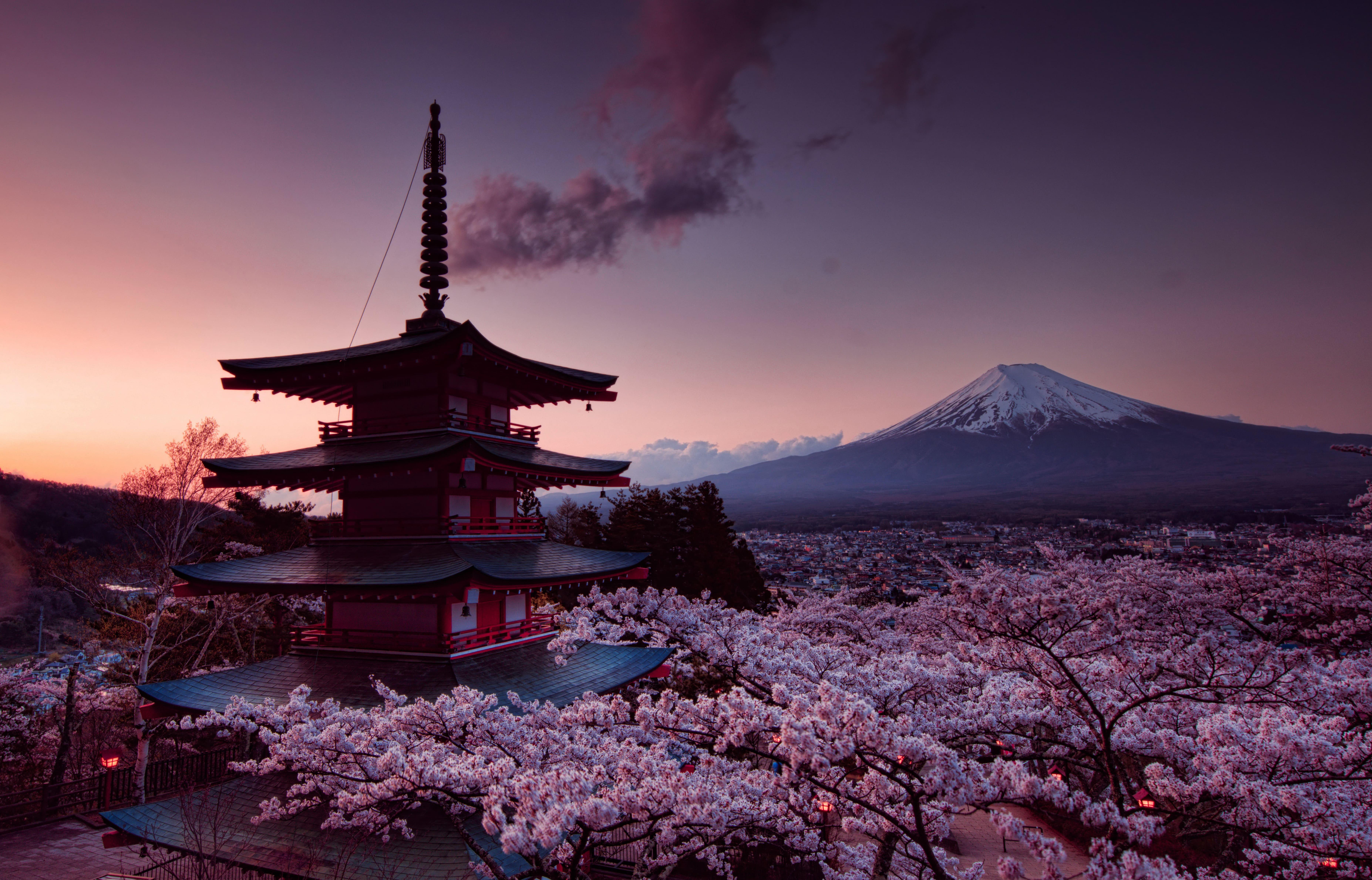 sakura-in-bloom-17