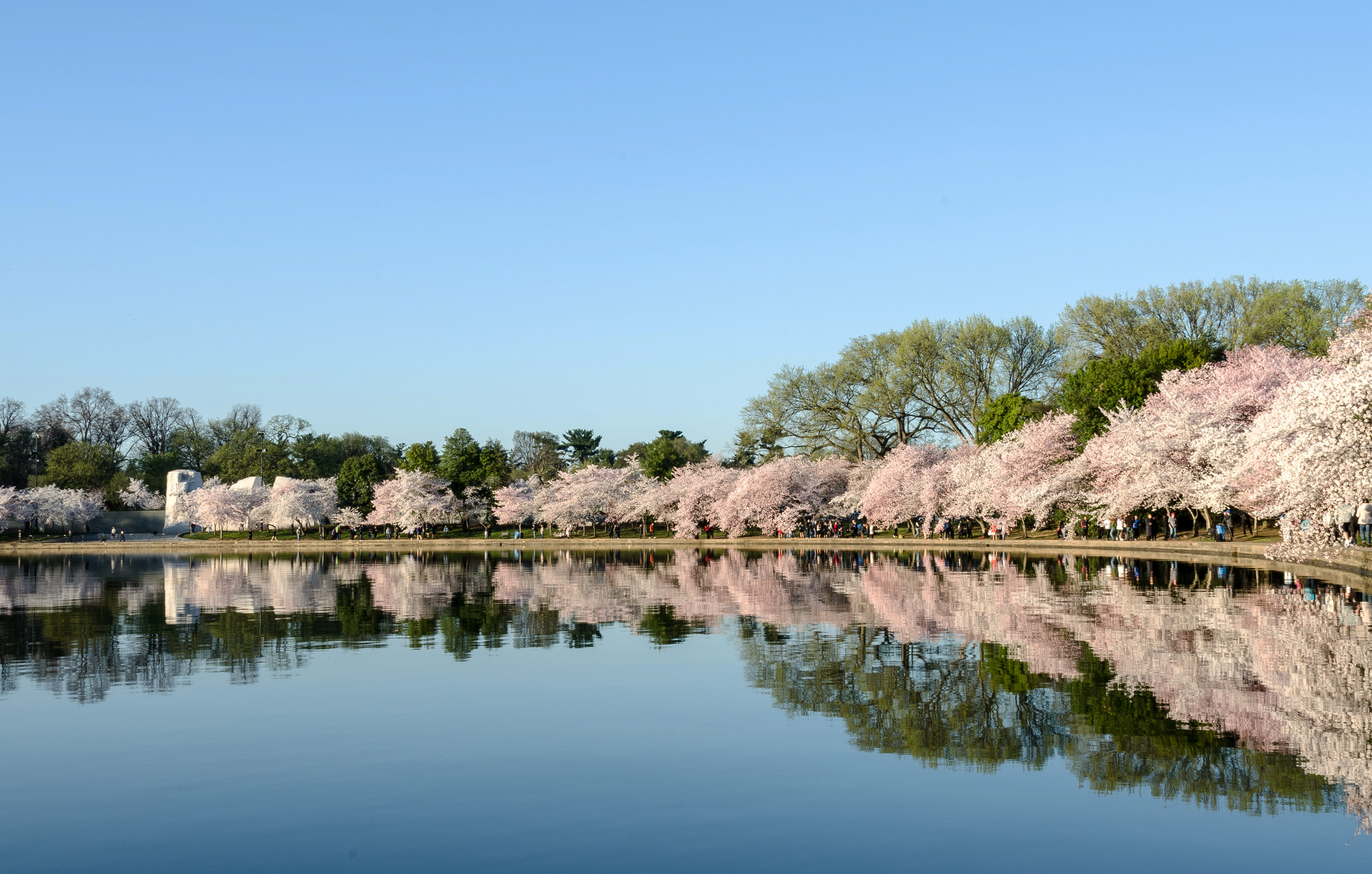 sakura-in-bloom-28