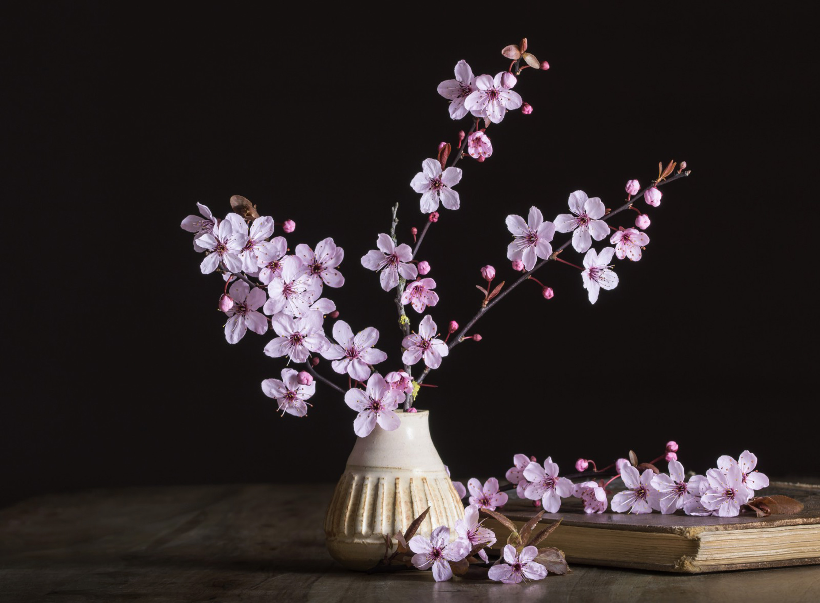 sakura-in-bloom-69
