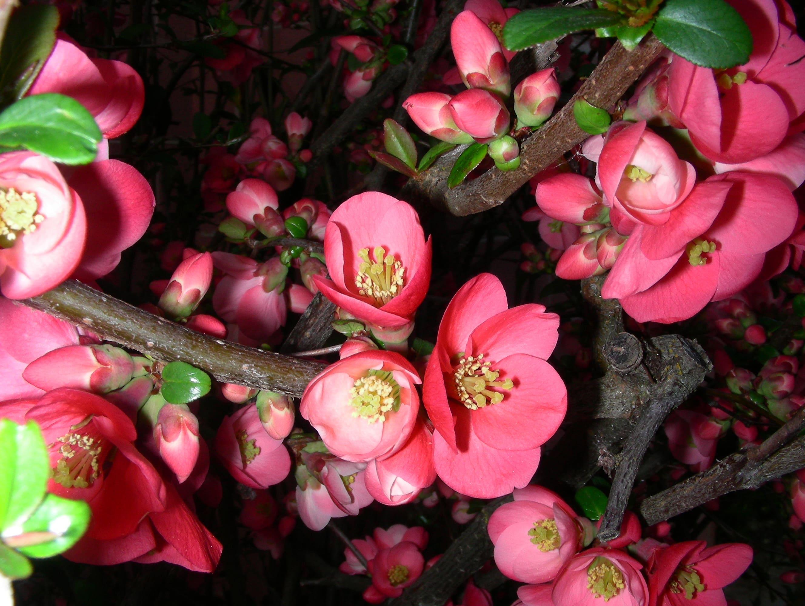 sakura-in-bloom-85