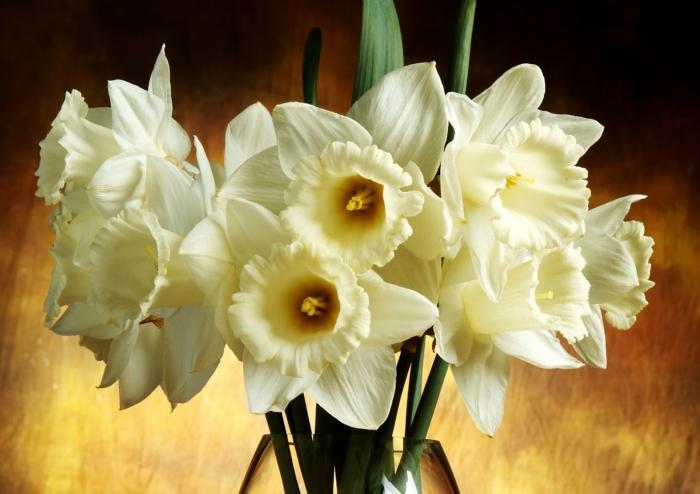 Belas fotos de narcisos - 100 fotos em alta resolução