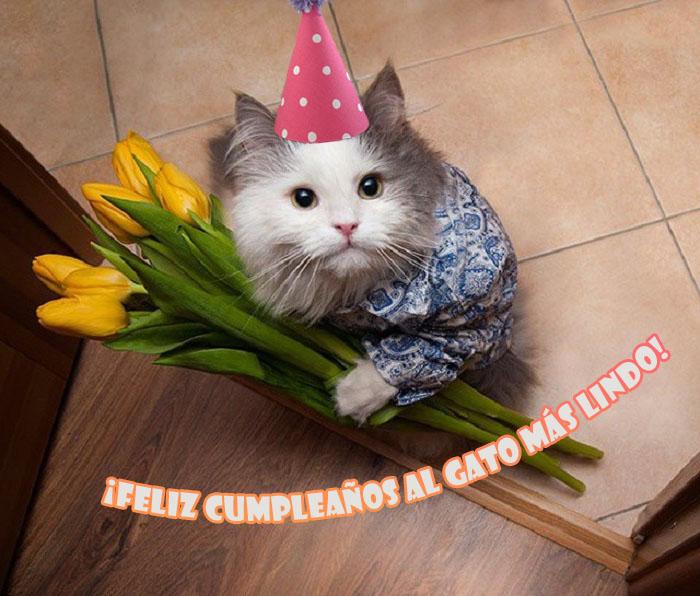 Imágenes de feliz cumpleaños para el gato - 50 tarjetas de felicitación