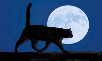 Obrazy koček pro kreslení a kopírování. Více než 100 obrázků zdarma