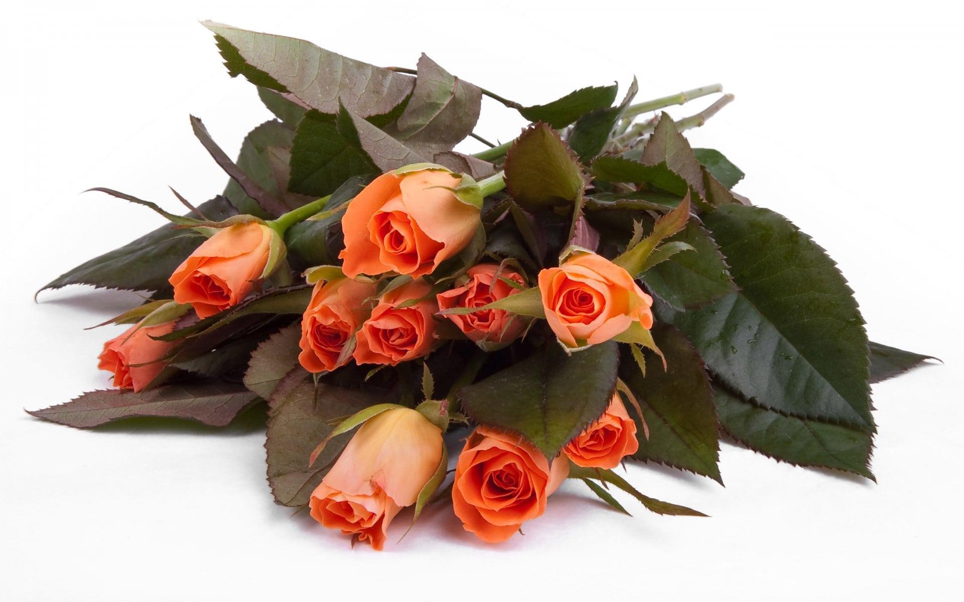 Photos de beaux bouquets de fleurs. 80 morceaux de superbes photos