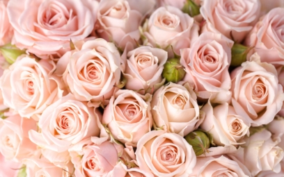 Photos of Beautiful Roses. 130 Bouquets in High Resolution