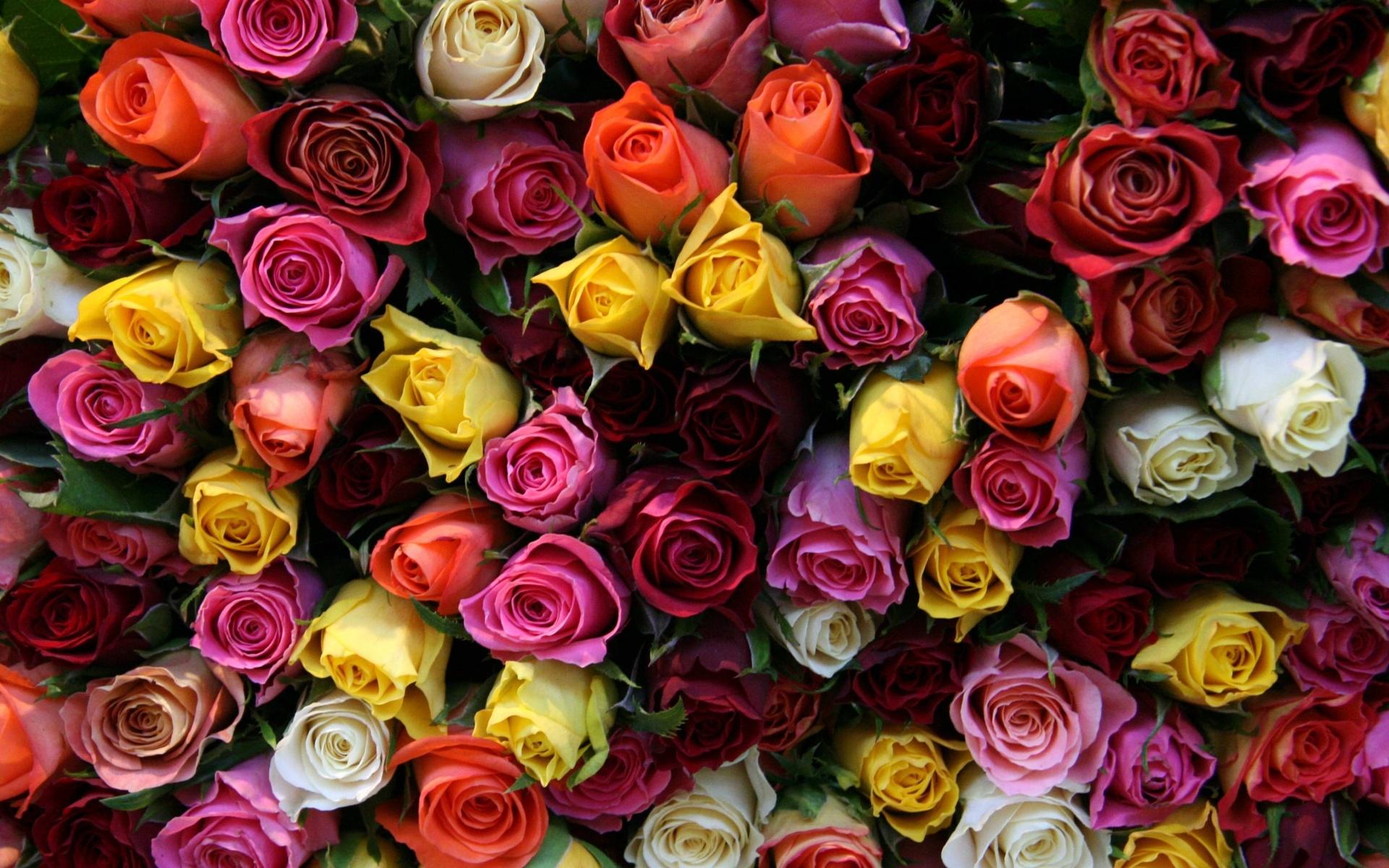 картинки розы всякие разные хотим немного