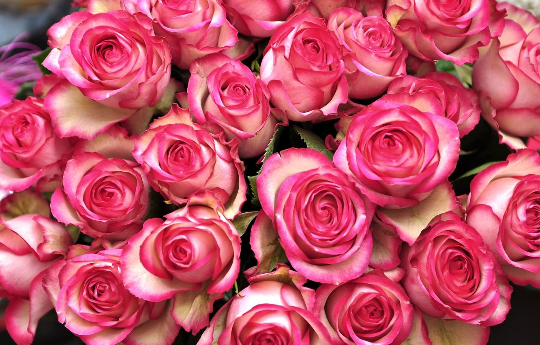 фото букетов роз в высоком разрешении