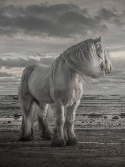 Photos de beaux chevaux. 160 images de haute qualité gratuitement