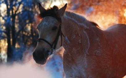 Fotografie krásných koní. 160 vysoce kvalitních obrázků zdarma