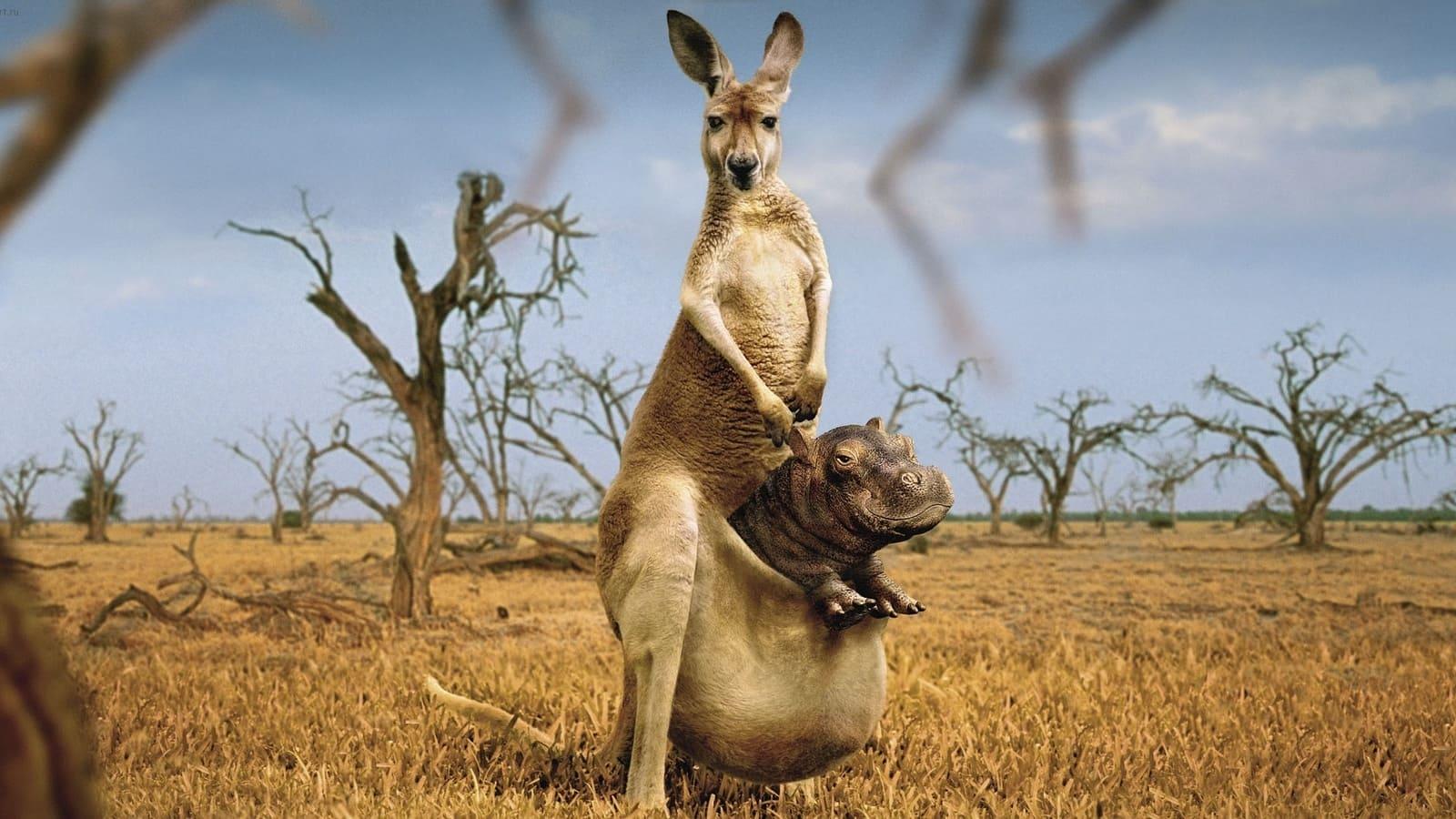 Tiere lustig hintergrundbilder Hintergrundbilder Tiere