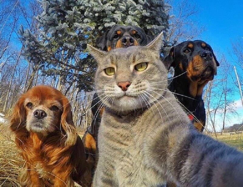 Lustige Bilder Von Tieren 200 Kostenlose Fotos