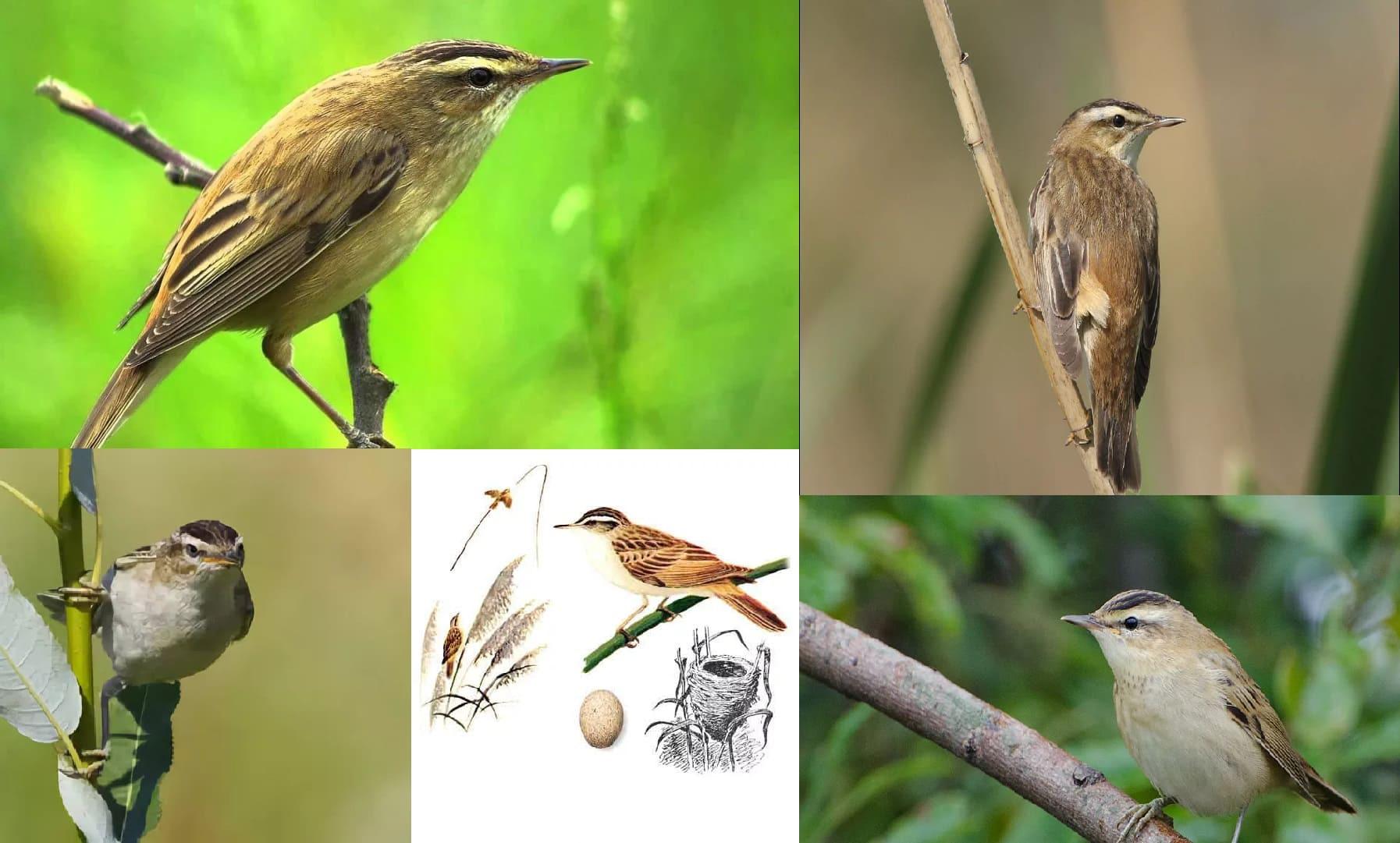 Fotos aller Zugvögel mit detaillierten Beschreibungen