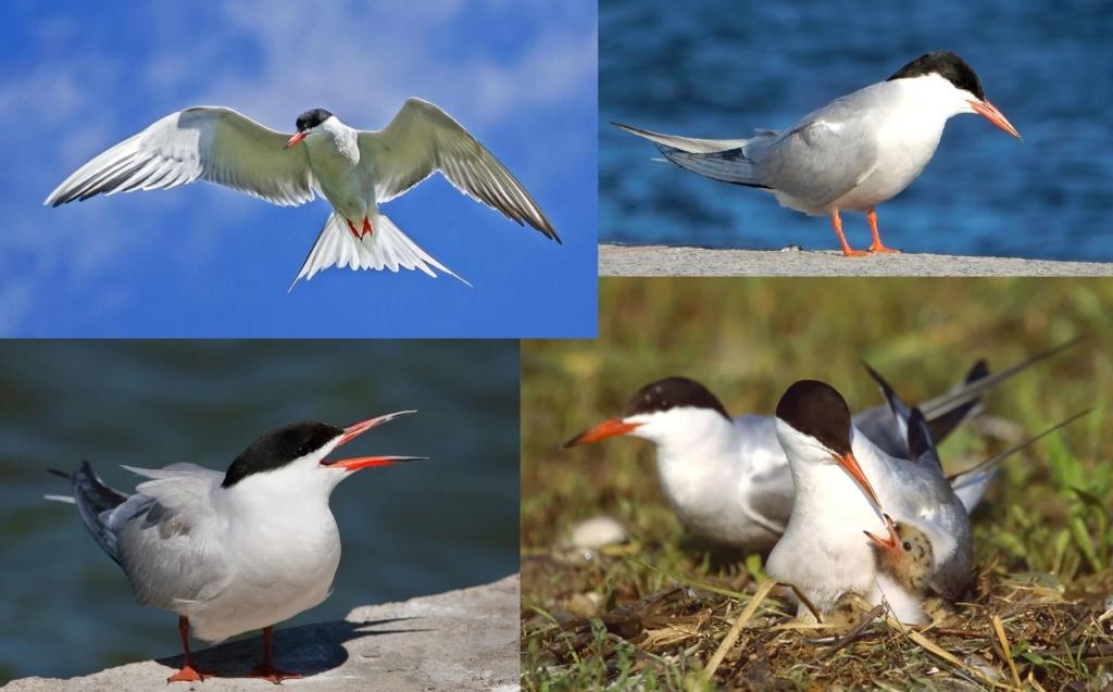 Foto di tutti gli uccelli migratori con descrizioni dettagliate