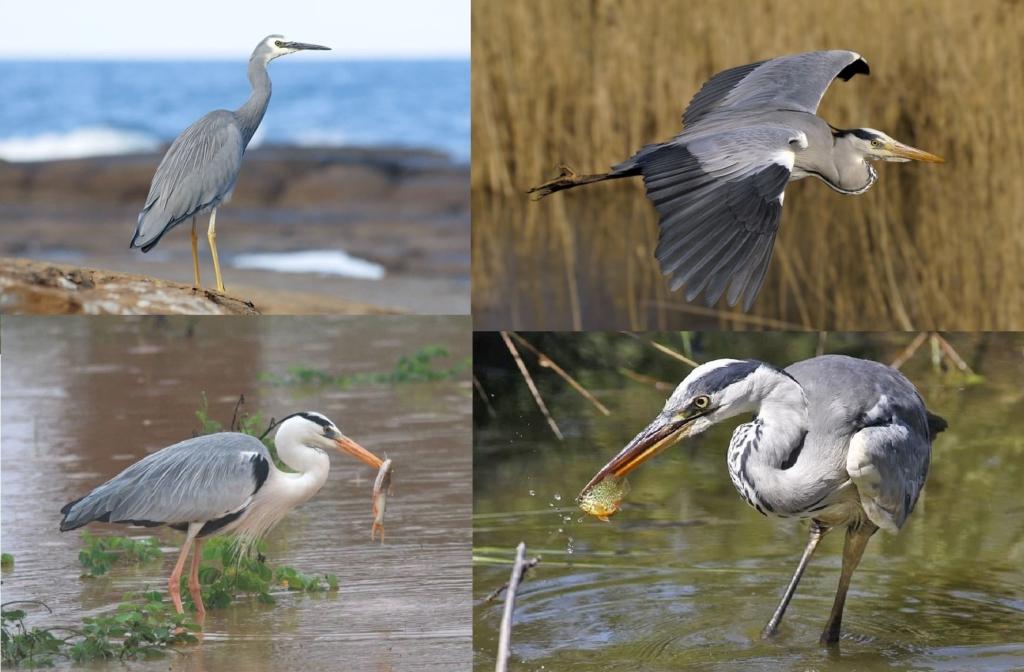 Fotos de todas as aves migratórias com descrições detalhadas