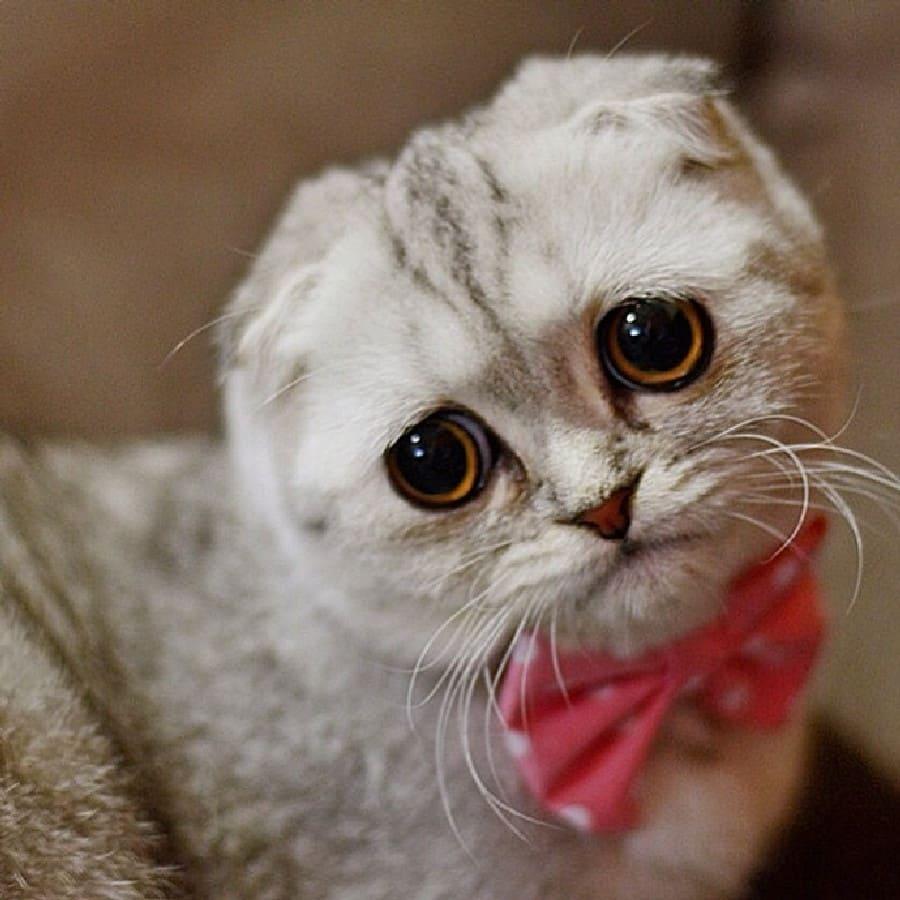 Картинки грустный котейка