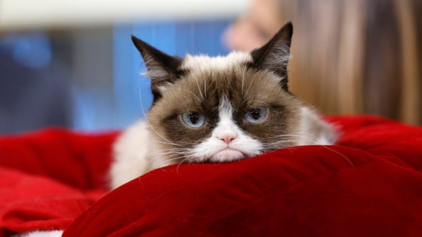 Pictures of Sad Cats. Photos, Cliparts, Images of Cats in Sadness