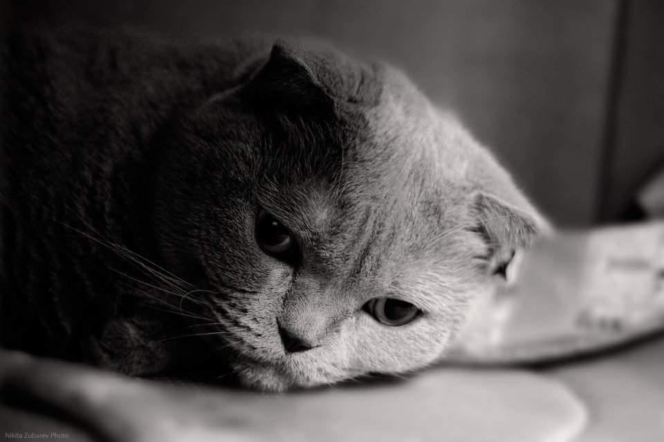 Картинки с грустным котиком