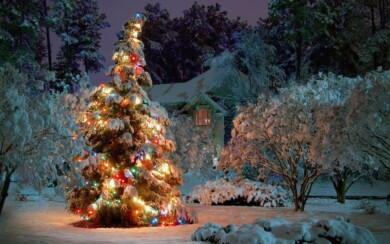 Belle foto invernali per il tuo telefonino. 100 immagini gratuite