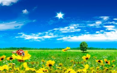 Fotografie krásné letní přírody. 100 obrázků na ploše zdarma