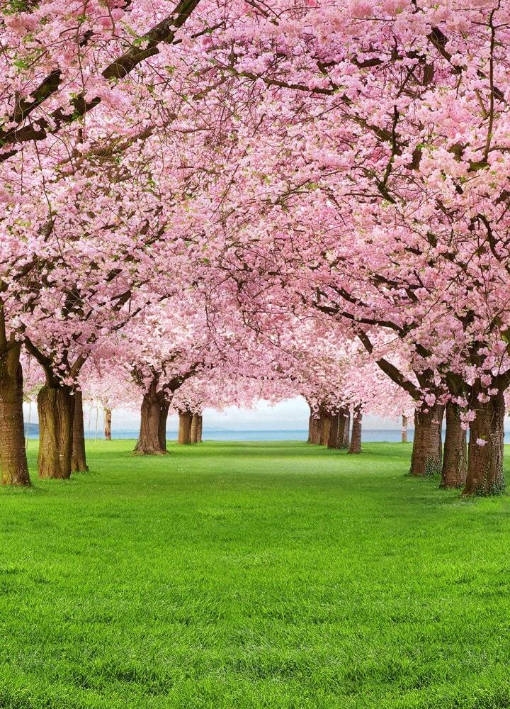 Immagini Di Primavera E Sfondi Per Il Tuo Telefonino Scarica Gratis