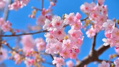 Immagini di primavera e sfondi per il tuo telefonino. Scarica gratis!